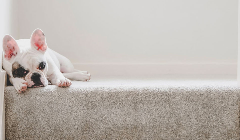 Dog lying at the top of some stairs
